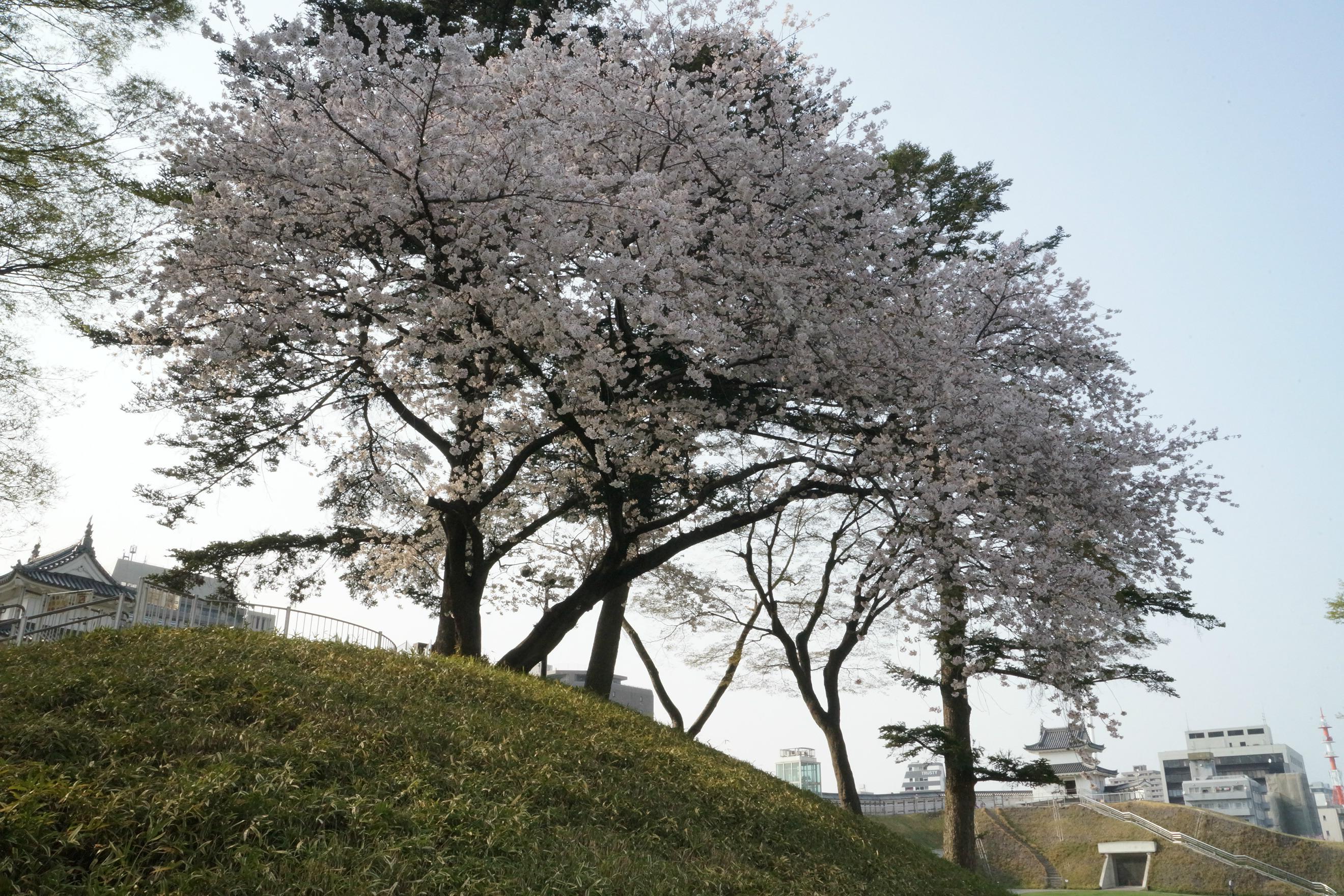 宇都宮城址公園2018年4月2日更新