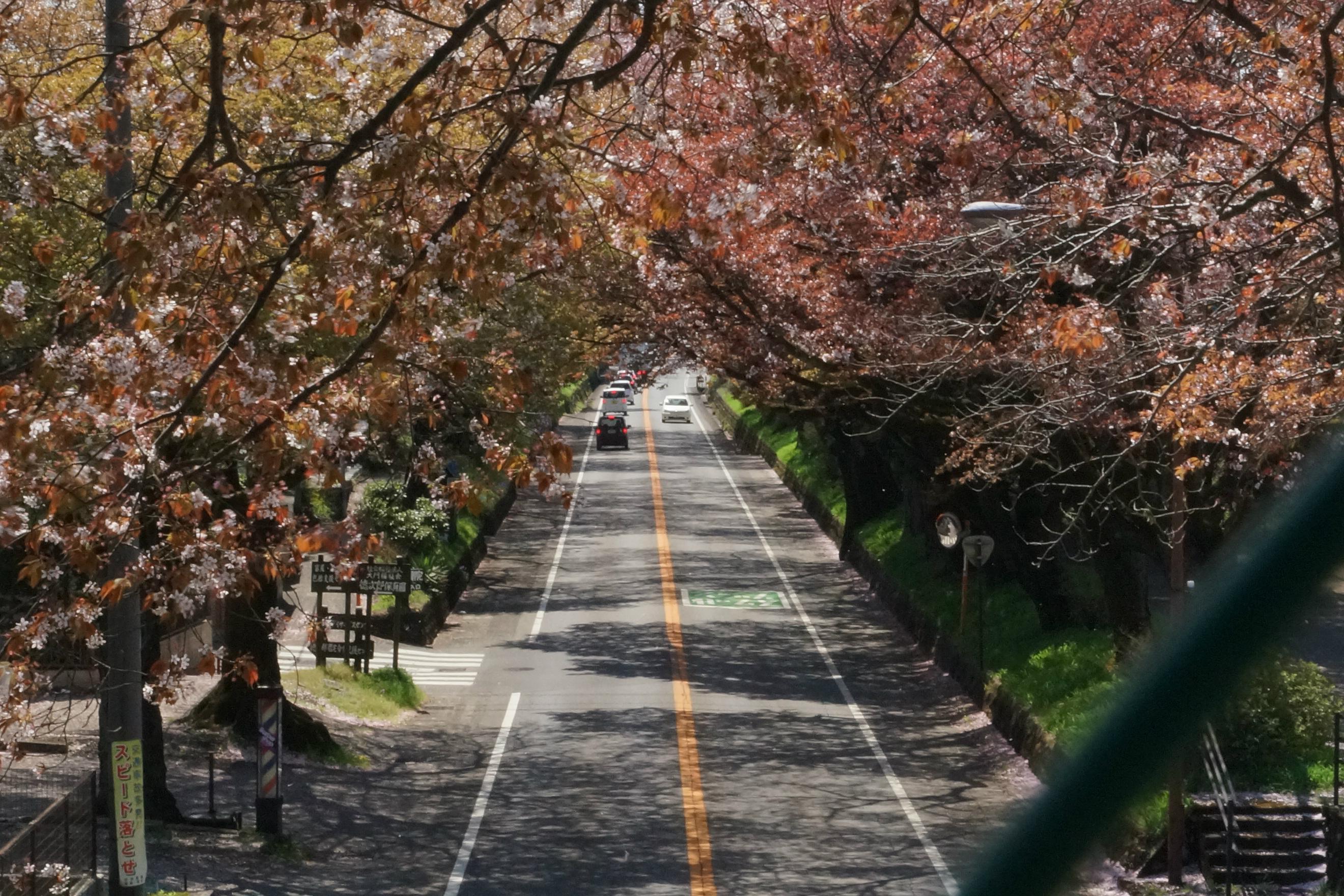 日光街道2018年4月9日更新